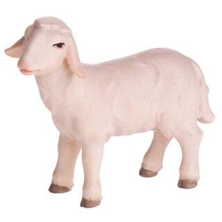 Abendlandkrippe Schaf stehend vorwärts schauend