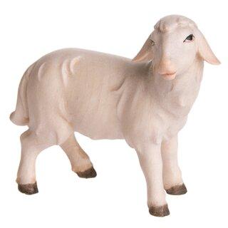Abendlandkrippe Schaf stehend rechts